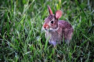 Kaninchen Außengehege