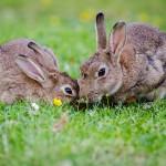 Kaninchen Haltung: Die Sicherheit im Stall