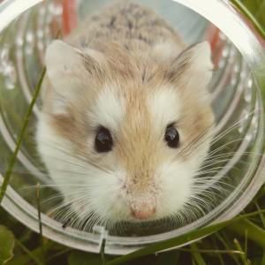 Die Einrichtung der Hamster Unterkunft - Was soll beim Hamster Haltung gleich mit besorgt werden?