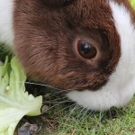 Kaninchen Haltung ernährung