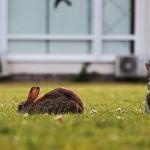 Kaninchen Haltung: Die Reinigung und der Auslauf
